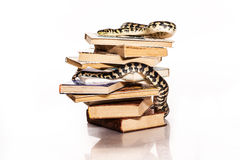 Books and a snake on a white background. Education and wisdom in the form of a stack of books and a beautiful snake on a white background stock image