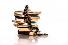 Books and a snake on a white background. Education and wisdom in the form of a stack of books and a beautiful snake on a white background stock images