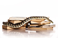 Books and a snake on a white background. Education and wisdom in the form of a stack of books and a beautiful snake on a white background royalty free stock image