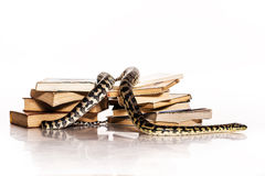 Books and a snake on a white background. Education and wisdom in the form of a stack of books and a beautiful snake on a white background royalty free stock images
