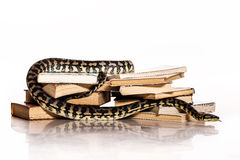 Books and a snake on a white background. Education and wisdom in the form of a stack of books and a beautiful snake on a white background stock photo