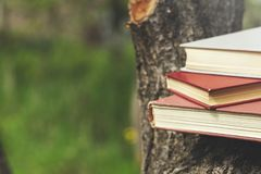 Books on tree royalty free stock photo
