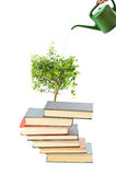 Books and watering pot Royalty Free Stock Image