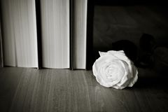 Books and White Rose Stock Images