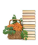 Books and wicker basket with red rowan berries on a white backgr Stock Photo