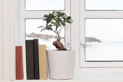 Books windowsill plant. Books and plant in windowsill with winter landscape in background Stock Images