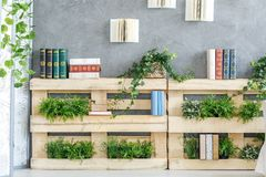 Bookshelf made of pallets. Modern bookshelf made of wooden pallets with green plants on it stock image