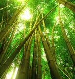 Boom 3 van het bamboe Stock Afbeeldingen