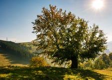 Boom aan een kant van de berg grasrijke heuvel Royalty-vrije Stock Afbeelding