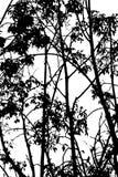 Boom abstracte zwart-wit Stock Afbeelding