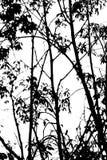 Boom abstracte zwart-wit Stock Foto