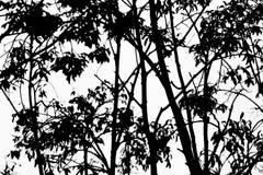 Boom abstracte zwart-wit Royalty-vrije Stock Fotografie