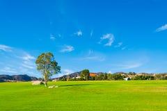 Boom alleen in een groene weide in Californië stock fotografie
