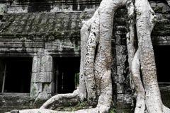 Boom-behandelde Ruïnes van Ta Prohm stock afbeelding