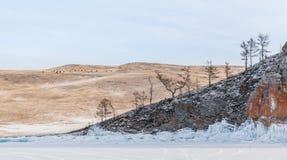 Boom bij de het meerkust van Baikal Stock Afbeelding
