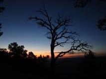 Boom bij de zonsondergang stock foto's