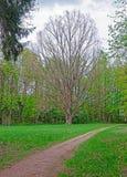 Boom bij het Nationale Park van Bialowieza in Polen royalty-vrije stock foto