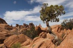 Boom bij het Nationale Park van Bogen Royalty-vrije Stock Foto