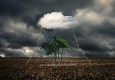 Boom bij het regenen Royalty-vrije Stock Afbeeldingen