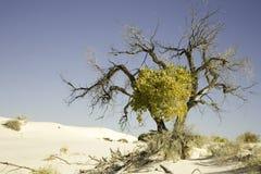 Boom bij het Witte Nationale Monument van het Zand Stock Afbeelding