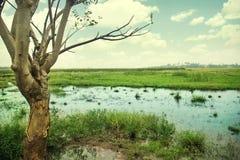Boom bij moeras Stock Afbeeldingen