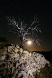 Boom bij nacht met de maan op de achtergrond Stock Afbeeldingen