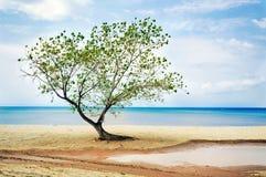 Boom bij strand royalty-vrije stock fotografie