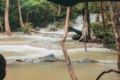 boom bij waterval stock afbeelding
