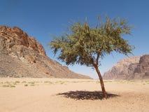 Boom bij Woestijn Stock Foto