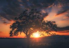 Boom bij zonsondergang Royalty-vrije Stock Afbeeldingen