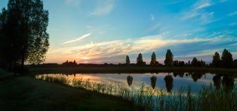 Boom bij zonsondergang Stock Afbeeldingen
