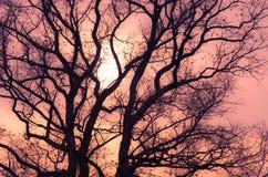 Boom bij zonsondergang Stock Foto's