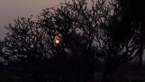Boom bij zonsondergang in India
