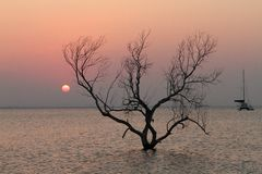 Boom bij zonsondergang op strand Royalty-vrije Stock Afbeelding