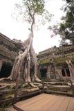 Boom in binnenplaats, Ta Prohm, Angkor Wat, Kambodja stock afbeelding