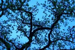 Boom in blauwe hemel Royalty-vrije Stock Foto's