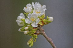 Boom in bloem in het midden van een park Royalty-vrije Stock Afbeelding