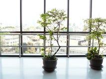 boom in bloempotten op het gebouw Stock Fotografie
