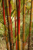Boom - Botanische Tuinen, Singapore Stock Afbeelding