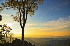 Boom bovenop de bergen: Nam Nao National Park, Thailand Royalty-vrije Stock Fotografie