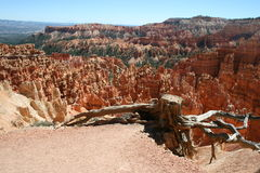 Boom in Bryce Canyon Royalty-vrije Stock Foto's