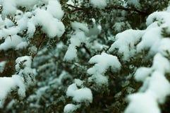 Boom coverd door sneeuw royalty-vrije stock foto