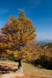 Boom in de herfst stock foto's