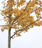 Boom in de herfst stock foto