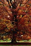 Boom in de herfst Royalty-vrije Stock Afbeeldingen