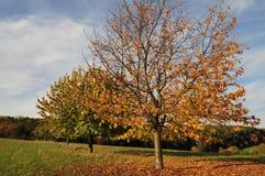 Boom in de herfst Stock Fotografie