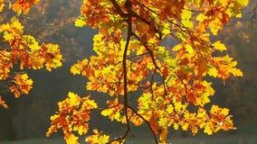 Boom in de herfst op een achtergrond van een hout stock footage