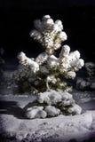 Boom in de sneeuw Stock Foto