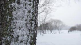 Boom in de sneeuw stock footage