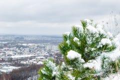 Boom in de sneeuw op de stadsachtergrond, Lviv Royalty-vrije Stock Afbeeldingen